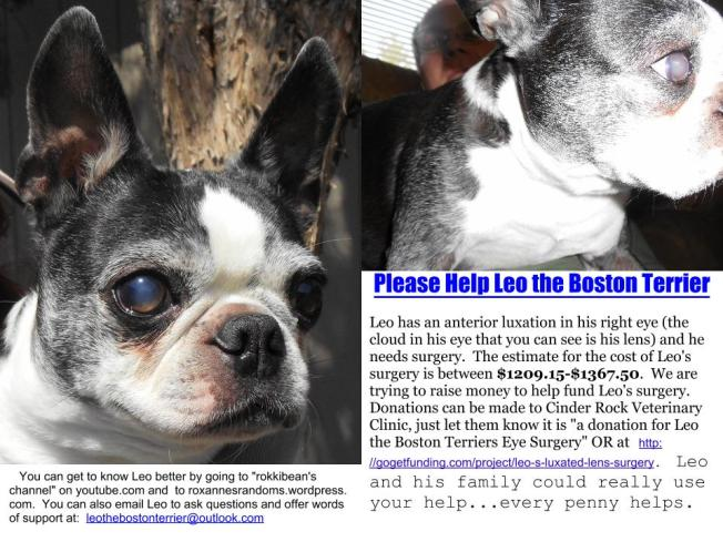 Leo the Boston Terrier Fundraiser Flyer