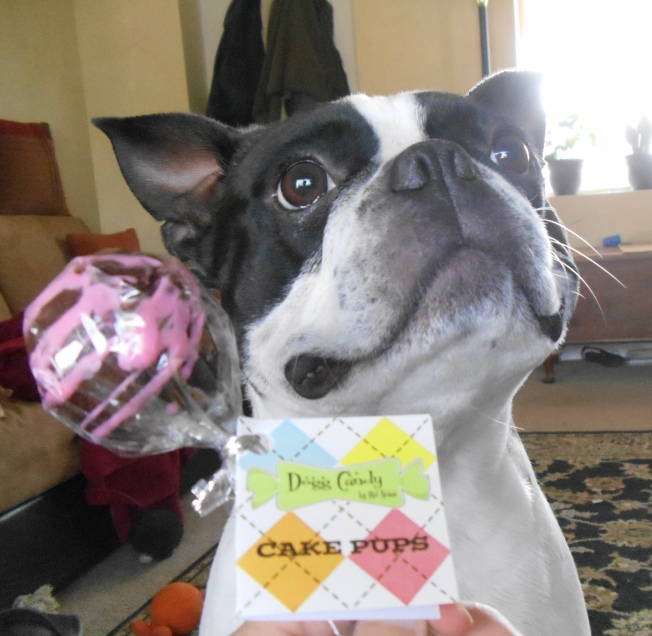 Today is Doc's 3rd birthday and of course he needed special birthday treats.