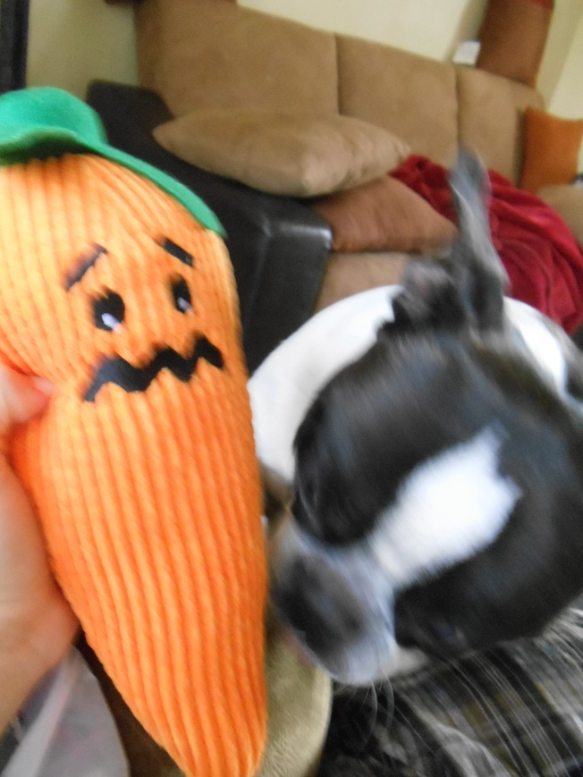 Another one of Doc's birthday gifts was a very cute & frightened looking stuffed carrot.